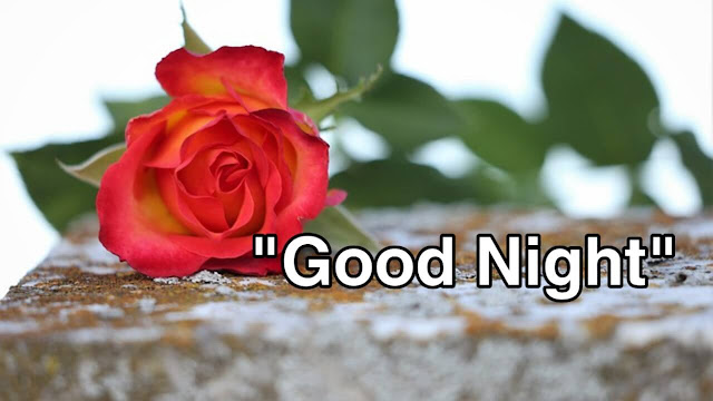 7 BEST GOOD NIGHT ROSE IMAGE HD DOWNLOAD FREE HERE