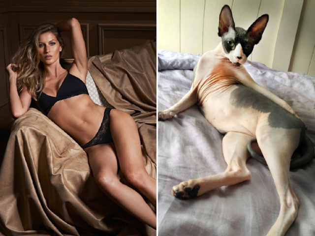 10 Cats That Are Doing A Much Better Job Modeling, Than Their Human Counterparts