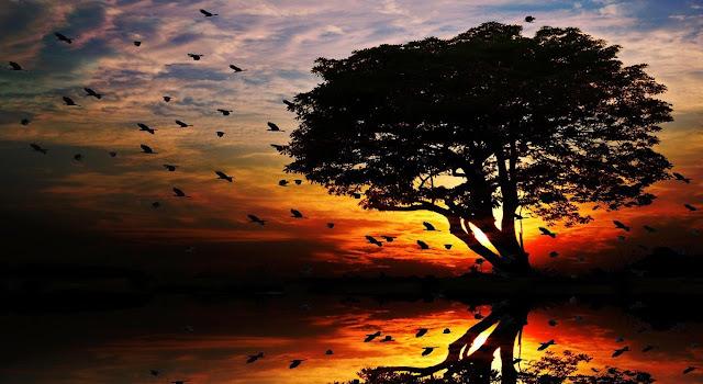 Kuşlar ve Ağaç