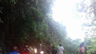 Pohon Tumbang Tutupi Badan Jalan di Geurute