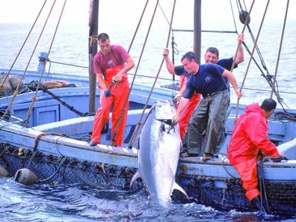 المهدية : نحو مراجعة نظام إسناد رخص صيد التنّ