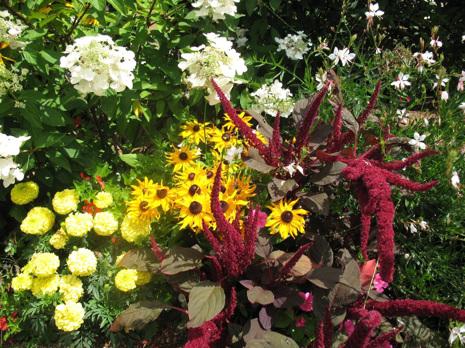 roses du jardin ch neland pour un massif de fleurs blanches. Black Bedroom Furniture Sets. Home Design Ideas