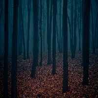 FunEscapegames Dark Forest Fun Escape
