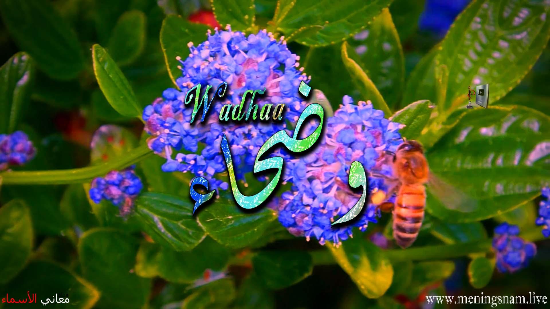 معنى اسم وضحاء وصفات حاملة هذا الاسم Wadhaa