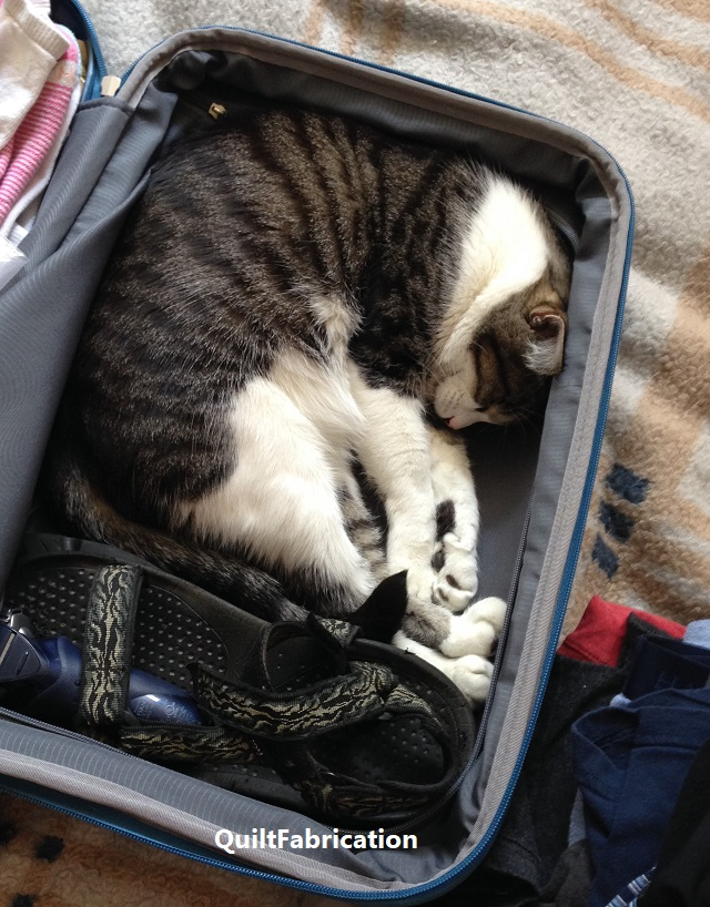 Winston curled in a suitcase