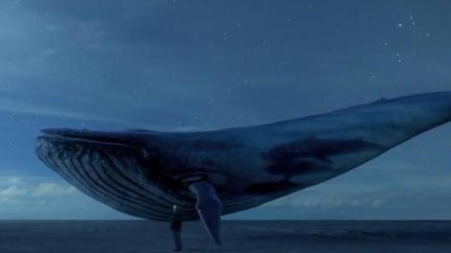 Mavi Balina Nedir? Mavi Balina Oyunu Neden Öldürüyor?