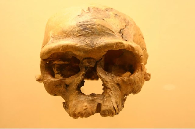 On the Origin of Our Species: Genetic and Fossil records will not reveal a Single point where Modern Humans Originated