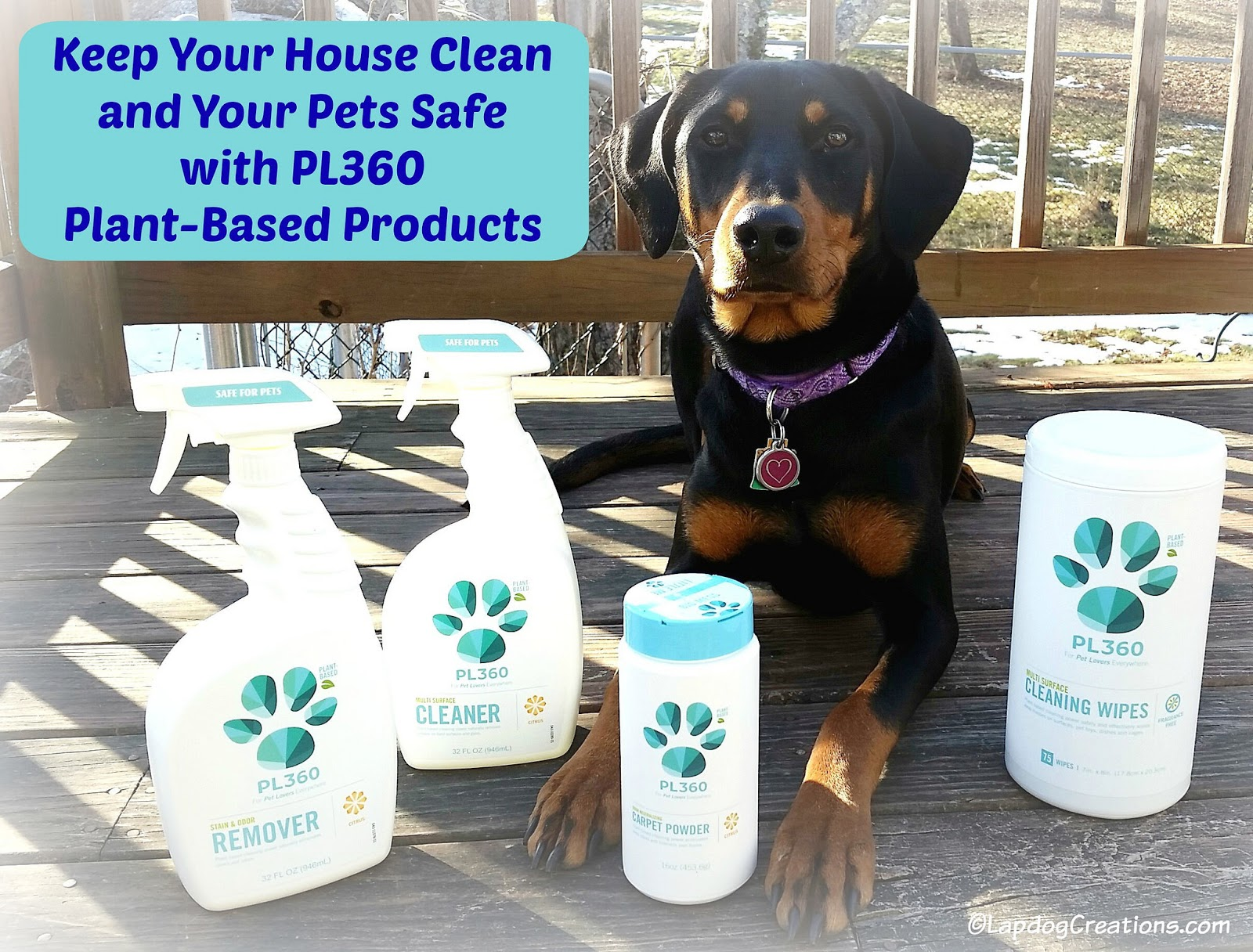 Lapdog Creations Spring Clean With Pet Safe Products From