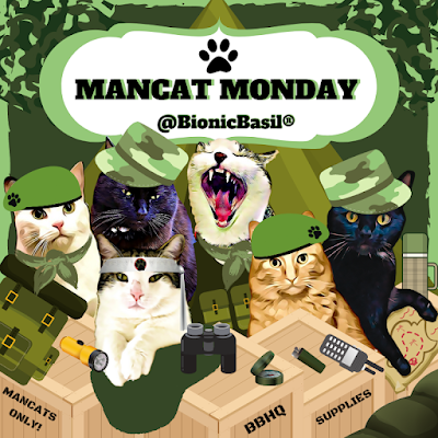 adventure cats, cats, camping cats