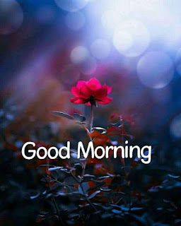 Good Morning  Wishes Lovely Pics