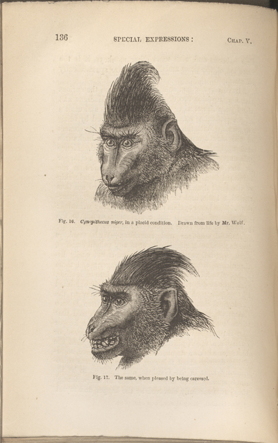 similarities between humans and primates essay The similarities can be seen throughout it is not surprising that there are some striking differences between the great apes and humans in mental abilities.