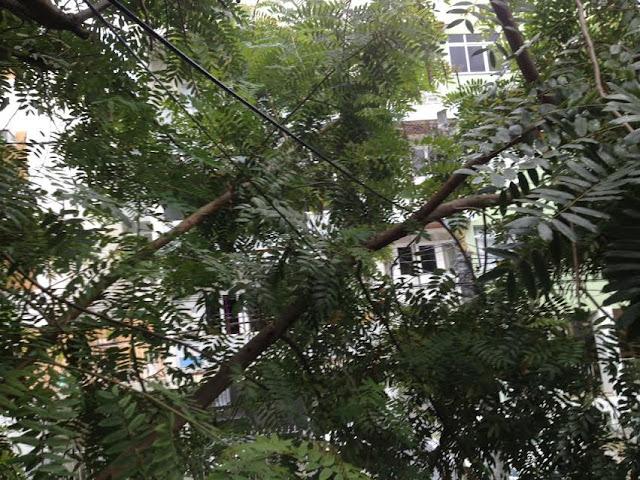 Galhas de árvores sobre a fiação na Rua Alagoinhas