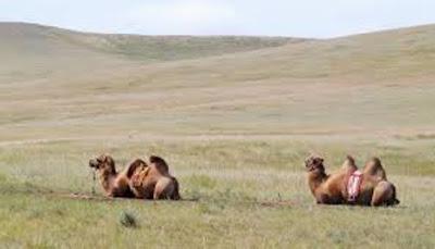 Une odyséee mongole, déser du Gobi