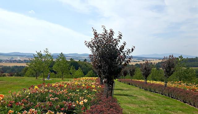arboretum wojsławice