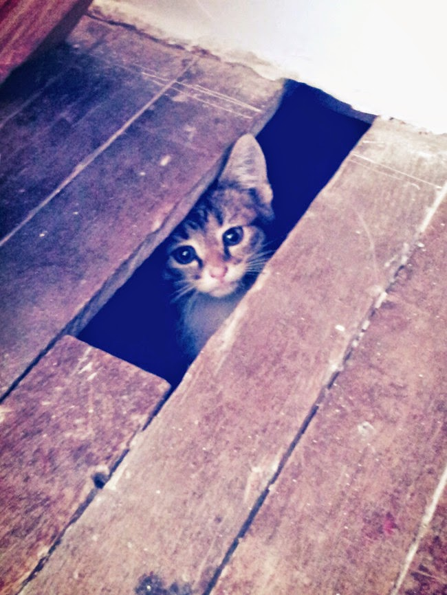 cats who mastered the art of hid and seek-9
