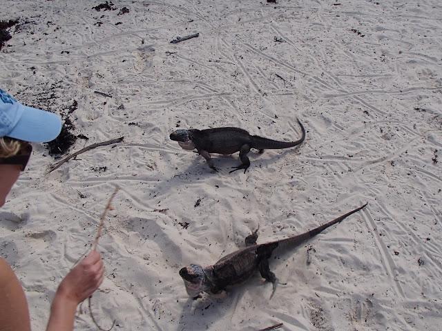 Susan feeding iguana