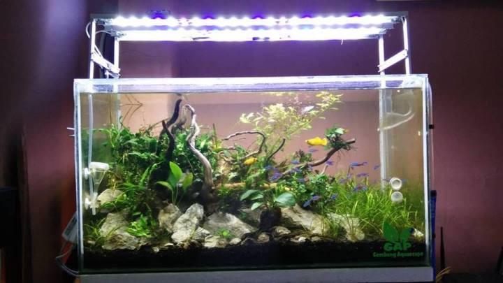 Nature Aquascape Concept 1
