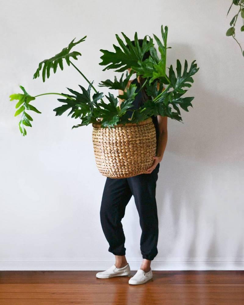 Maceta de mimbre con planta de Philodendron