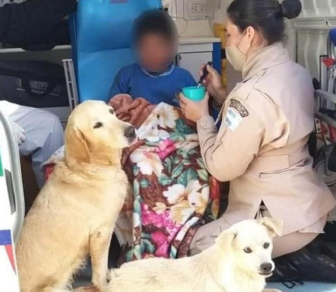 Un niño estuvo perdido 19 horas y sobrevivió a la noche más fría abrazado a sus perros