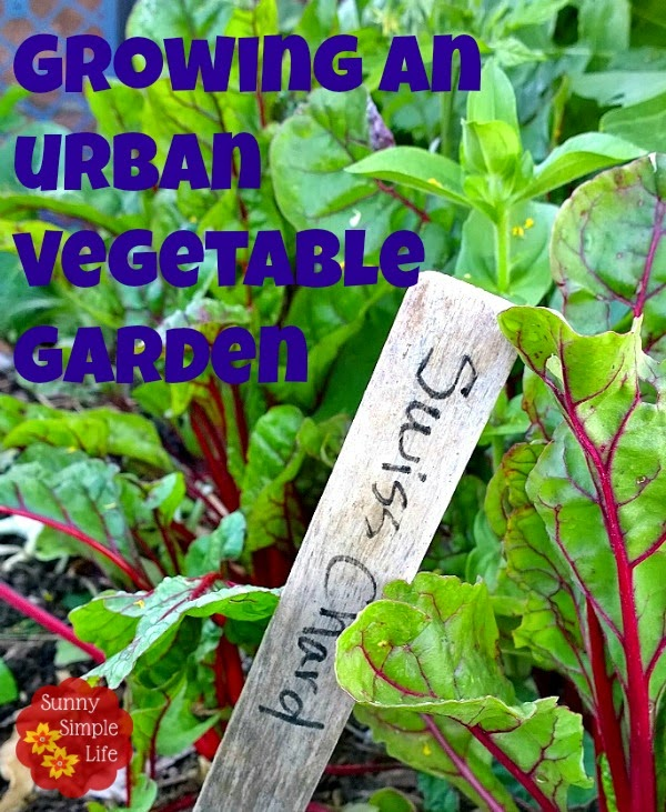 How to Grow a Vegetable Garden in the City, urban farming, Swiss chard, sustainability
