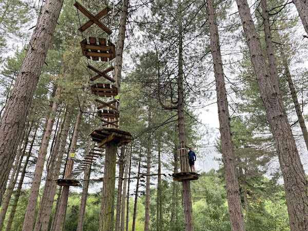 Go Ape At Delamere Forest | Living Arrows 32/52