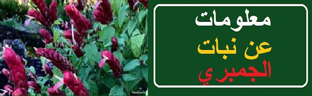 """فوائد نبات الروبيان"" ""طريقة زراعة نبات الروبيان"" ""اماكن تواجد نبات الروبيان"" ""نبات الجمبري"" ""فوائد نبات الجمبري"" ""شكل نبات الجمبري"" ""طريقة زراعة نبات الجمبري"" ""تسميد نبات الجمبري"" ""رعاية نبات الروبيان"" ""نبات زينة"" ""نبات زينة داخلي"" ""نبات زينة بنفسجي"" ""نبات زينة صناعي"" ""نبات زينة متسلق"" ""نبات زينة سيكاس"" ""نبات زينة خارجي"" ""نبات زينة منزلية"" ""نبات زينة ايكيا"" ""نبات زينة المرجان"" ""نبات زينة احمر"" ""نبات الزينه"" ""نباتات الزينة المزهرة"" ""نباتات الزينة doc"" ""نباتات الزينة en francais"" ""نبات للزينة"" ""نبات الليليوم"" ""معلومات عن نباتات الزينه"" ""نباتات زينة pdf"" ""نبات الزينة pdf"" ""نباتات الزينة pdf"" ""نباتات الزينة ppt"" ""نبات الامريللس"" ""نباتات زينه"" ""نبات زينه"" ""نبات زينة داخلية"" ""نباتات زينة داخلية"" ""نباتات زينة داخلية مزهرة"" ""نباتات زينة داخلية سامة"" ""نباتات الزينة داخلية"" ""نبات الزينة الداخلي"" ""اسماء نباتات زينة داخلية"" ""نباتات الزينة الداخلي"" ""اسماء نبات الزينة الداخلي"" ""نبات البنفسج"" ""نباتات زينة صناعية"""