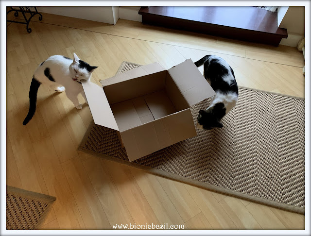 Musical Boxes with Smooch and Melvyn - Who Won ©BionicBasil® The Pet Parade 392