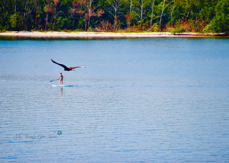 Life On The Intracoastal, Florida - Ms. Toody Goo Shoes