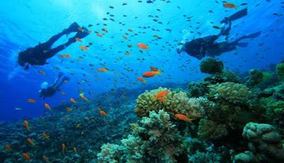 Taman Laut Derawan
