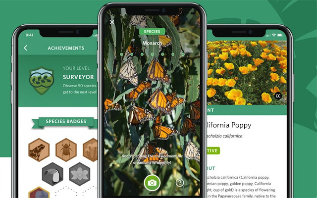Shazam: there is an application to identify plants and animals from a photo