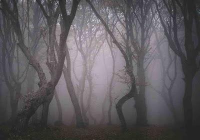 7 Hutan di Dunia yang Menyimpan Cerita Mengerikan