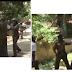 (வீடியோ இணைப்பு) ஆர்ப்பாட்டத்தில் கலந்து கொண்டவர்கள் மீது பொலிஸ் உத்தியோகத்தர்  தாக்குதல் . வைரலாகும் காணொளி.