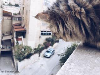 أجمل صور قطط