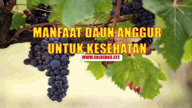 4 Manfaat Daun Anggur Untuk Kesehatan Dan Cara Mengolahnya