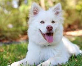 Essay on Dog in Punjabi