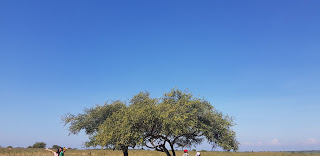 Pesona Taman Nasional Baluran, The Africa Van Java