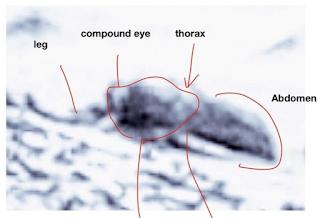 conspiracy to silence bugs on mars theory