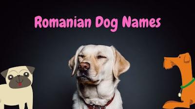Romanian Dog Names
