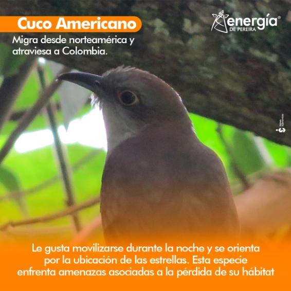 Con 1.954 especies reportadas, Colombia es el país más rico en aves del planeta