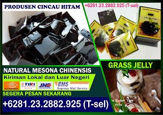 +6281.232.882.925, Cincau Hitam Bubuk, Bubuk Cincau Surabaya, Bubuk Cincau Instan