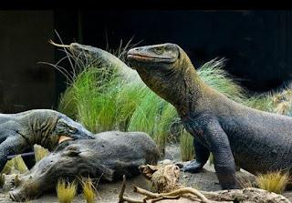 Wisata Pulau Komodo, Labuhan Bajo-Eksotisme Di Pulau Sang Naga