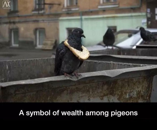 Let them eat bread