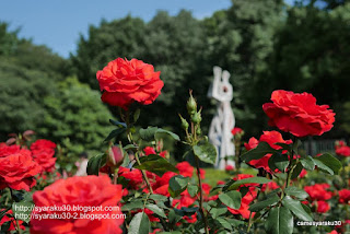 彫像と赤いバラの写真