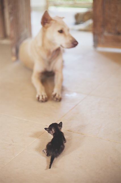 Anak Kucing Terkecil Dunia