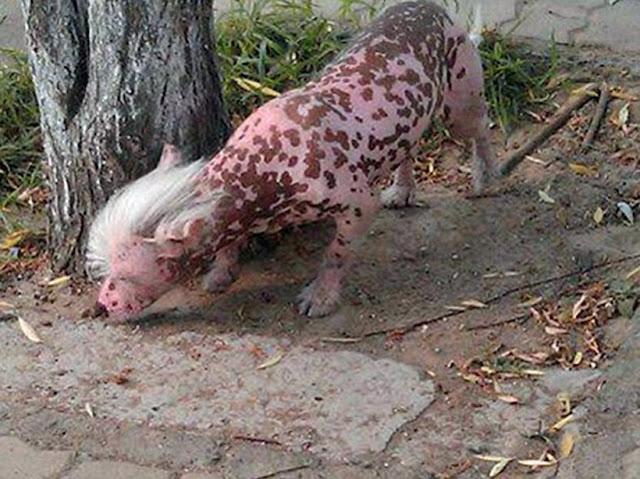 hewan Aneh dan Langka yang Pernah di Temukan