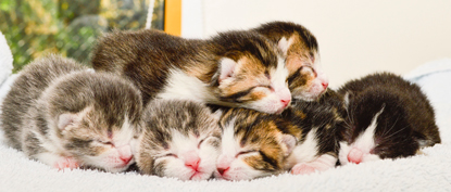 bundle of kittens of a variety of colours sleeping