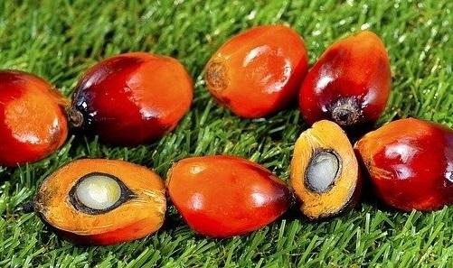Manfaat Dan Khasiat Minyak Kelapa Sawit Indonesia