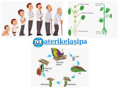 Pertumbuhan dan Perkembangan pada tumbuhan hewan dan manusia