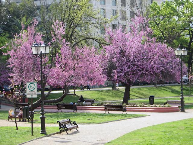 Primavera em Santiago