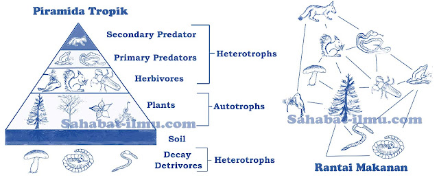 https://www.sahabat-ilmu.com/2019/12/pengertian-jenis-dan-contoh-macam-macam-ekosistem.htm